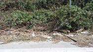 Πάτρα: Έκοψαν τα χορτάρια για καθαρισμό και… έβγαλαν χωματερή (pic)