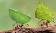 Βγήκαν τα μυρμήγκια παγανιά; Όχι για πολύ...