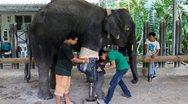 Μόσα: Η πρώτη ελεφαντίνα με προσθετικό πόδι