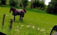 Άλογο ακούει Heavy Metal και το διασκεδάζει (video)
