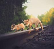 Φωτογραφίζοντας από πολύ κοντά άγρια ζώα! (pics)