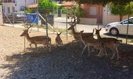 Διακοπτό - Μεγάλωσε ο 'ζωολογικός κήπος' του 'Κουρσάρος'!