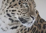 Υπερρεαλιστικά πορτρέτα άγριων ζώων που μοιάζουν… έτοιμα να ζωντανέψουν! (pics)