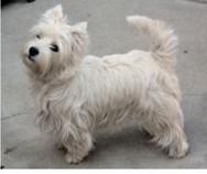 Πάτρα: Βρέθηκε το σκυλάκι που είχε χαθεί στην πλατεία Βουδ