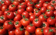 Δείτε πως πρέπει να αποθηκεύετε τις ντομάτες για να διατηρούνται περισσότερο