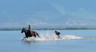 Κάνοντας surfing με... άλογα (video)