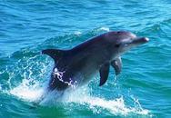 Πάτρα: Βγήκαν δελφίνια στην ακτή του Καστελοκάμπου!