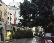 Πάνω από 25 δέντρα έπεσαν στην Πάτρα εξαιτίας της κακοκαιρίας