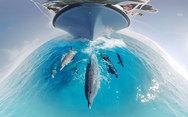 Κολυμπώντας με ένα κοπάδι δελφινιών στον ωκεανό (video)