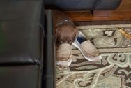 Σκυλιά που... κοιμούνται παντού! (pics)