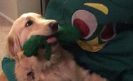 Όταν ένας σκύλος βλέπει το αγαπημένο του παιχνίδι να ζωντανεύει! (video)