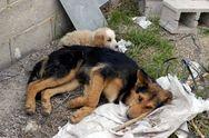 Λεχαινά: Οι Λονδρέζοι κτηνίατροι ξεκίνησαν να περιθάλπουν σκυλιά
