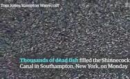 Χιλιάδες νεκρά ψάρια κάλυψαν κανάλι της Νέας Υόρκης (video)