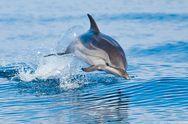 Δυτική Ελλάδα: H συγκινητική προσπάθεια διάσωσης ενός δελφινιού (pic)