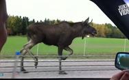 10 παράξενα πράγματα που μπορείς να συναντήσεις κατά την οδήγηση (video)