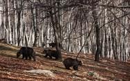 Ξύπνησαν οι αρκούδες στο καταφύγιο του Αρκτούρου στο Νυμφαίο (pics)