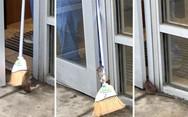 Ποντίκι επιμένει να μπει σε κτίριο (video)