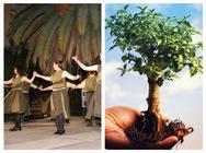 Πάτρα: Ένας μεγάλος χορευτικός κύκλος θα 'αγκαλιάσει' την δενδροφύτευση του Νότιου Πάρκου