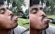 Έβαλε έναν κάβουρα κοντά στο στόμα του αλλά... την πάτησε (video)