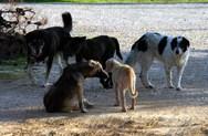 Το Ποτάμι για τα αδέσποτα στην Πάτρα: 'Ο Δήμος οφείλει να λύσει το θέμα'