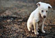 Πάτρα: Παγκόσμια Ημέρα για τα Αδέσποτα, χωρίς καταφύγιο για τα ζώα!