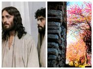 Πως το δέντρο που κρεμάστηκε ο Ιούδας σχετίζεται με το Κάστρο της Πάτρας (pics)
