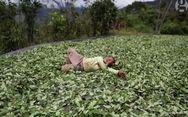 Η ζωή στην «κοιλάδα της κοκαΐνης» στο Περού (video)