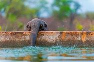 Ελεφαντάκια ποζάρουν στο φακό και κλέβουν τις εντυπώσεις! (pics)