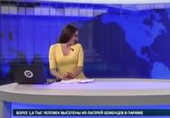 Λαμπραντόρ «εισέβαλε» σε δελτίο ειδήσεων (video)