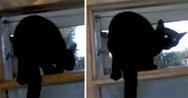 Πονηρή γάτα πιάστηκε να γαβγίζει στο παράθυρο και το γύρισε αμέσως σε νιαούρισμα (video)