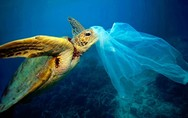 Καταστρέφεται από τα πλαστικά η Μεσόγειος!