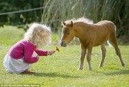 Αυτό είναι το μικρότερο άλογο στον κόσμο! (φωτο)