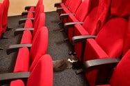 Γάτα γέννησε μέσα σε... θέατρο (φωτο)