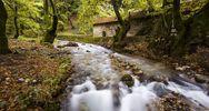 Το πιο μαγευτικό πλατανόδασος της Ελλάδας απέχει μόλις 2 ώρες από την Πάτρα! (pics+video)
