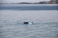 Νεκρό δελφίνι στην Παλαιοπαναγιά της Ναυπάκτου (pics+video)