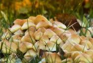 Γνωριμία με τα άγρια μανιτάρια στην Αγία Κυριακή Ναυπακτίας