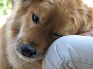 Σκυλίσιες μέρες