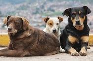 Η ΒΙΠΕ της Πάτρας και τα γύρω χωριά έχουν γεμίσει από αδέσποτα σκυλιά