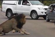 Λιοντάρι τρομάζει παιδιά που το τραβάνε βίντεο