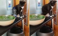 Μια πολύ επίμονη και κακομαθημένη γάτα (video)