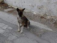 Πάτρα: Ένα μικρό λυκάκι στην Λεύκα, αναζητά οικογένεια!