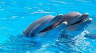 Έρευνα - Αν τα δελφίνια είχαν χέρια, οι άνθρωποι θα ήταν… ξεγραμμένοι!