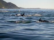 Δείτε video - Δελφίνια στην Ιχθυόσκαλα της Πάτρας