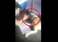 Σοκ - Ινδός δέρνει τον σκύλο του επειδή δεν μπορεί να... γράψει την αλφάβητο (video)