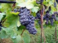 Βρέθηκαν τα αρχαιότερα μέχρι σήμερα ίχνη κρασιού