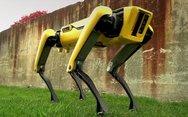 Το... ρομποτικό κατοικίδιο (video)
