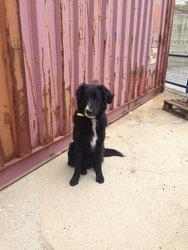 Σε κατάστημα της Πάτρας βρέθηκε να τριγυρνά ο σκύλος της φωτογραφίας