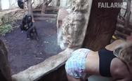 Απίστευτα fails με άγρια ζώα (video)