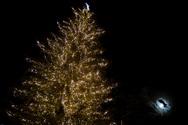 Το ψηλότερο φυσικό δέντρο της Ελλάδας στολίστηκε και βρίσκεται στα Τρίκαλα! (φωτο)