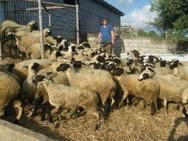 Αχαΐα - Σήμερα οι αποζημιώσεις από τον ΕΛΓΑ στους δικαιούχους κτηνοτρόφους